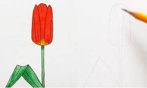 Cách vẽ nhiều loại hoa từ phác họa hình khối cơ bản