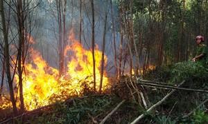 Hơn 100 ha rừng keo, thông ở Huế bị thiêu rụi
