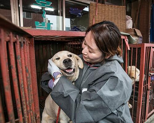 Mộtnhà hoạt động âu yếm chú chó được giải cứu ở Gupohôm 1/7. Ảnh: HSI