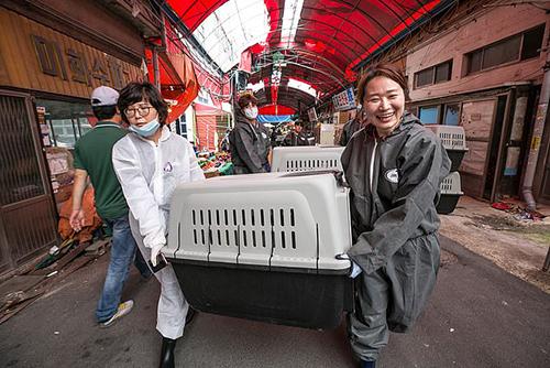 Các nhà hoạt động di chuyển 80 con chó còn lại ở Gupo khi khu chợ bị giải thể hôm 1/7. Ảnh: HSI