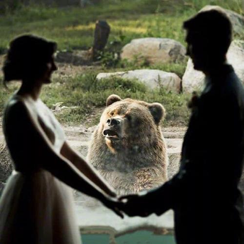 Chú gấu há miệng nhìn về phía cô dâu với vẻ ngạc nhiên.