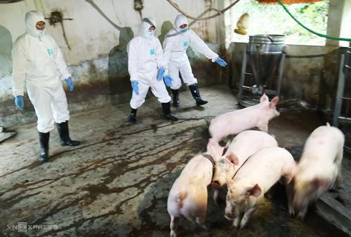 Lực lượng chức năng ở Hà Nội diễn tập ứng phó với dịch tả lợn châu Phi. Ảnh: Ngọc Thành.