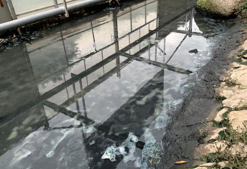 Nước và váng bùn bên trong khu quây thí điểm sau khi dừng phun mưa nano. Ảnh: Tất Định