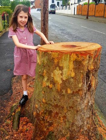 Sophie (Anh) chụp ảnh bên gốc cây sồi đã bị chặt. Ảnh: Andrea Cooper.