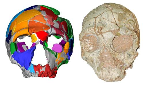 Hộp sọ bị hư hỏng nặng được kiểm tra bằng mô phỏng máy tính. Ảnh: AFP.