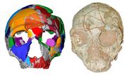 Phát hiện hài cốt người hiện đại lâu đời nhất ngoài châu Phi