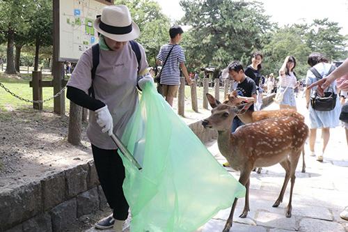 Rác thải nhựa đang đe dọa loài hươu quý tại công viên Nara. Ảnh: SCMP.