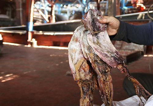 Mực khô được bán giá 125.000 đồng kg. Ảnh: Đắc Thành.