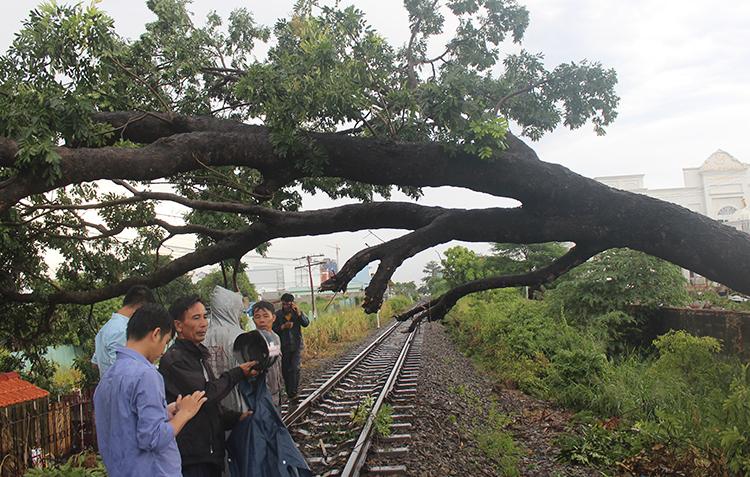 Cây xà cừ bật gốc chắn ngang đường sắt qua phường Tân Tiến, TP Biên Hoà. Ảnh: Phước Tuấn