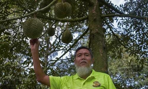Ông Lu Yuee Thing, nông dân trồng sầu riêng đã 40 năm tại Malaysia. Ảnh: CNA.
