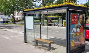 Thành phố Hà Lan trồng hoa ở trạm xe buýt thu hút ong