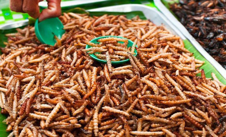 Món ăn từ sâu được bán tại chợ ở Thái Lan. Ảnh:Asiafood.