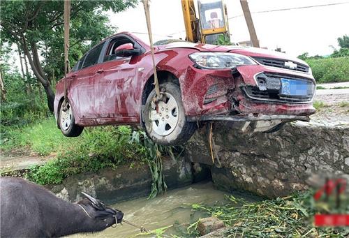 Chiếc Chevrolet được cẩu lên bờ. Con trâu vẫn bị cột vào sợi dây thừng sau khi tai nạn xảy ra.