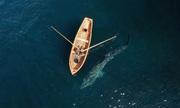 Cá nhám phơi nắng bơi sát thuyền của nhà làm phim