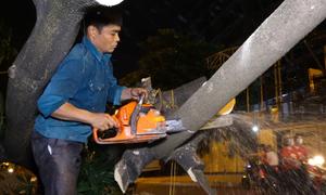 Công nhân xuyên đêm đánh chuyển hoa sữa lên bãi rác Nam Sơn