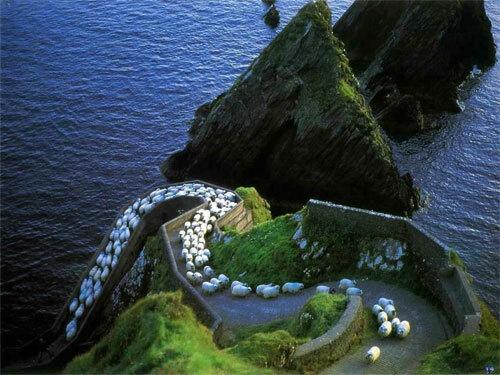 Con đường nổi tiếng với tên gọi Cao tốc Cừu (Sheep Highway).