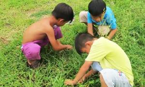 Thú vui bắt dế ngày hè của những đứa trẻ xóm biển Bình Thuận