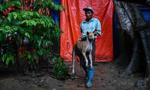 Thành phố lớn nhất Myanmar bắt hàng nghìn con chó hoang