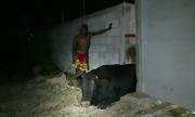 Giải cứu bò kẹt cứng giữa hai bức tường ở Thái Lan