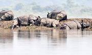 Động vật hoang dã chết la liệt do ngập lụt ở công viên Ấn Độ