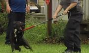 Bà mẹ Mỹ bị khởi tố vì không bảo vệ con khỏi chó dữ