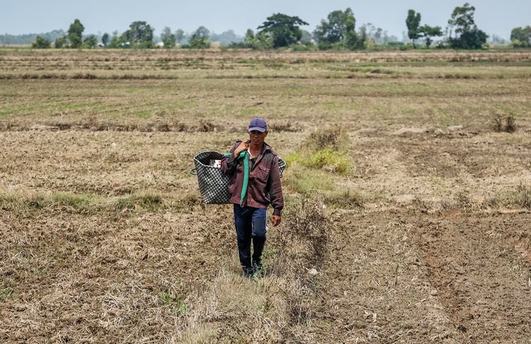 Nông dân xã Đại Ân 2, huyện Trần Đề, tỉnh Sóc Trăng trên cánh đồng khô cằn. Ảnh: Thành Nguyễn.