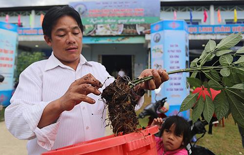 Anh Hồ Văn Lượng mang một cây sâm trên 10 năm tuổi đến thi. Ảnh: Đắc Thành.