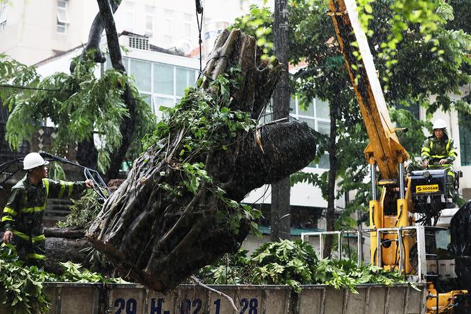 Nhiều cây bật gốc tại Hà Nội sau bão Wipha