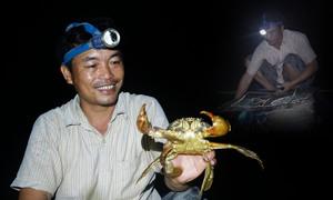 Đặt lợp thu hoạch cua kiếm tiền triệu mỗi đêm ở Cà Mau