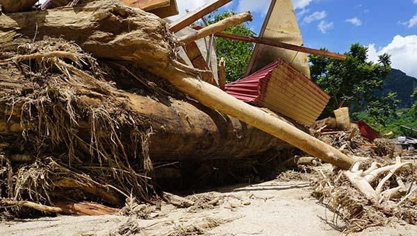 Cây gỗ rừng cỡ lớn ngập khắp bản Sa Ná, lẫn bùn đất khiến công tác tìm kiếm gặp nhiều trở ngại. Ảnh: Lê Hoàng.