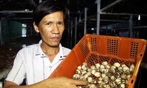 Nông dân thu hơn 30 triệu đồng mỗi tháng nhờ trồng nấm rơm