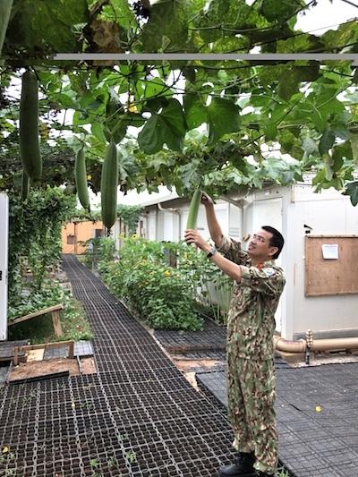 Bác sĩ Bùi Đức Thành thu hoạch mướp, xung quanh nhà ở, nhiều loài hoa khoe sắc. Ảnh: BVDC