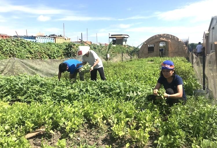 Bệnh viện dã chiến của Việt Nam đã phủ xanh khoảng 200m2 đất cằn cỗi ở khu vực doanh trại, cung cấp rau ăn hàng ngày và tặng các đơn vị bạn. Ảnh: BVDC