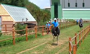 Khách cưỡi đà điểu trong trang trại của Triều Tiên