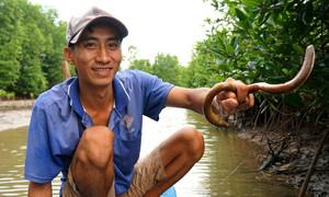 Bắt lịch bằng lưỡi câu kiếm tiền triệu mỗi ngày ở Cà Mau