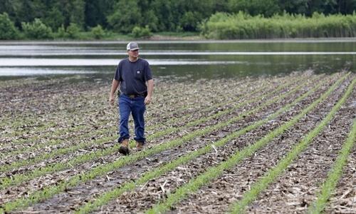 Jeff Jorgenson nhìn cánh đồng ngập lũ ở Shenandoah, thành phố phía tây nam bang Iowa, hôm 29/5. Ảnh: AP.