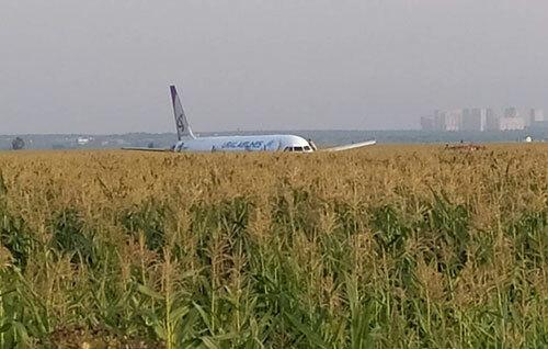 Máy bay của hãng Ural Airlines hạ cánh khẩn xuống đồng ngô ở ngoại ô Moskva hôm nay. Ảnh: TASS