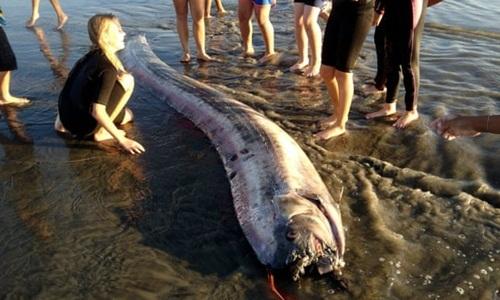 Cá mái chèo dạt lên một bờ biển. Ảnh: AP.