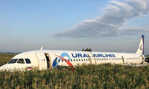 Máy bay A321 nằm trên cánh đồng ngô sau sự cố. Ảnh: Reuters.