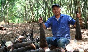 Vườn tre 15.000 m2 của nông dân Đồng Nai vào vụ thu hoạch
