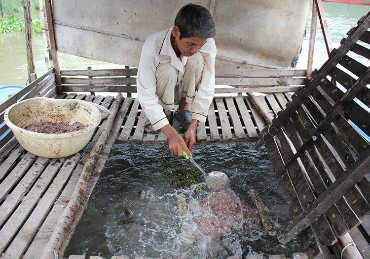 Người nuôi cá lỗ nặng vì cá sông làm thức ăn khan hiếm do lũ không về. Ảnh: Hoàng Nam
