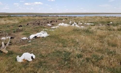 Những con vịt và chim lội nước chết la liệt do mưa đá ở Mỹ. Ảnh: FWP.