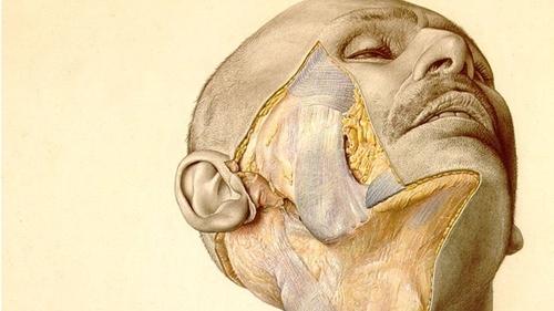Một bức vẽ trongBộ tranh Giải phẫu Cơ thể người Pernkop. Ảnh: BBC.
