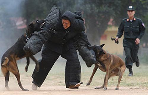 Luyện tập cho chó nghiệp vụ. Ảnh: ANTG.