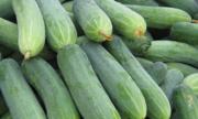 Có nên ăn dưa leo ruột bị đắng?