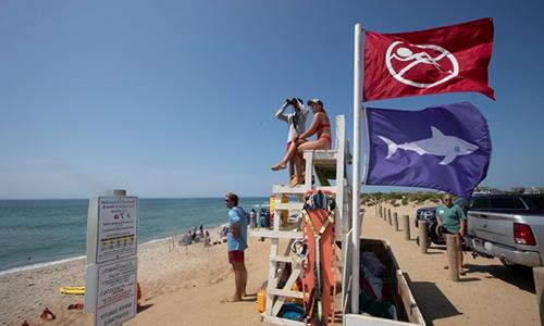 Các bãi biển ở Cape Cod đặt trong tình trạng báo động do cá mập xuất hiện nhiều bất thường. Ảnh: Pressfrom.