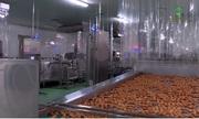 Cận cảnh quy trình tạo ra trứng gà ăn liền