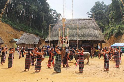 Một lễ hội đâm trâu của dân tộc Cơ Tu ở huyện Tây Giang không tiến hành nghi thức thọc cây giáo vào con trâu. Ảnh: Đắc Thành.