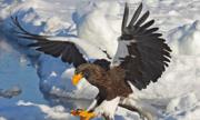 Tại sao chim đại bàng chọn cách đối đầu với bão?