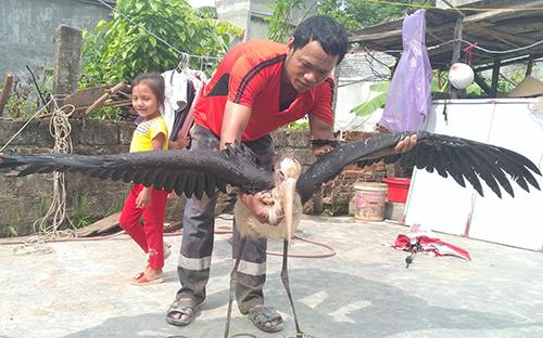 Chim đang được anh Chung chăm sóc tại nhà. Ảnh: Đ.H